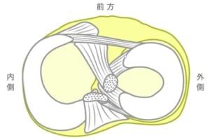 半月板の構造