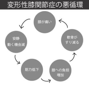 変形性膝関節症の悪循環