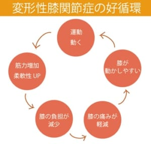 運動治療がもたらす変形性膝関節症への良い循環