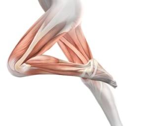 膝関節に関係する筋肉
