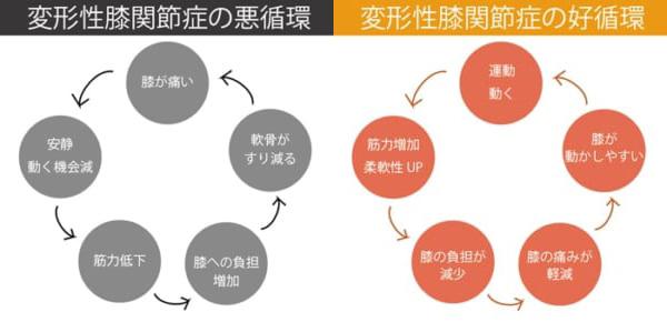 変形性膝関節症の悪循環と好循環